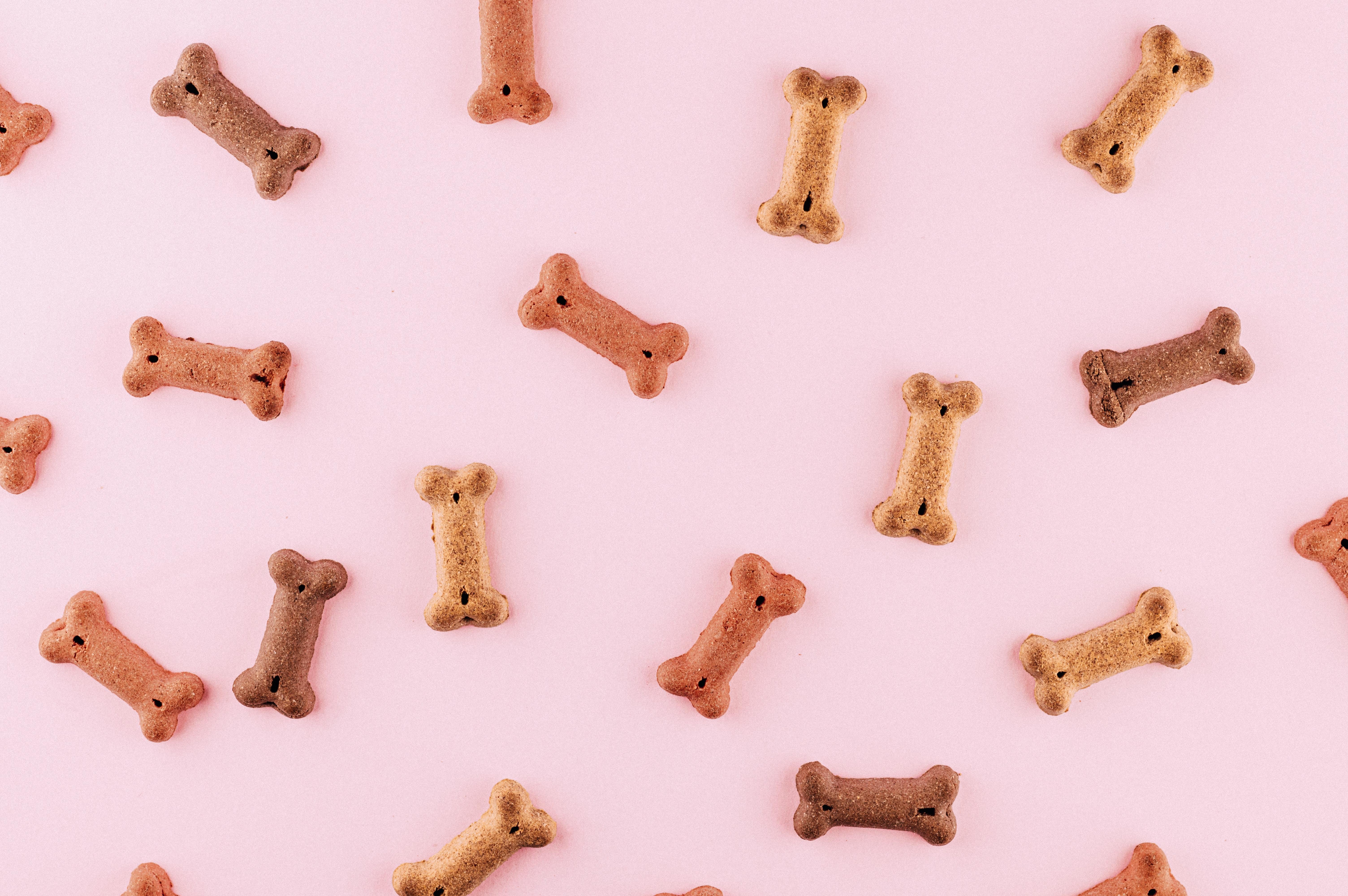 Kutyusunk védekező rendszere: immunerősítő kutyáknak